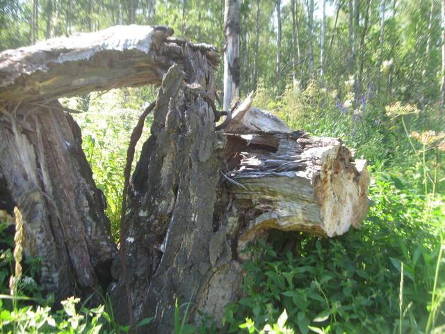 http://images.vfl.ru/ii/1533910509/726d30ed/22840098_m.jpg