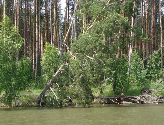 http://images.vfl.ru/ii/1534351531/e43d5044/22905070_m.jpg