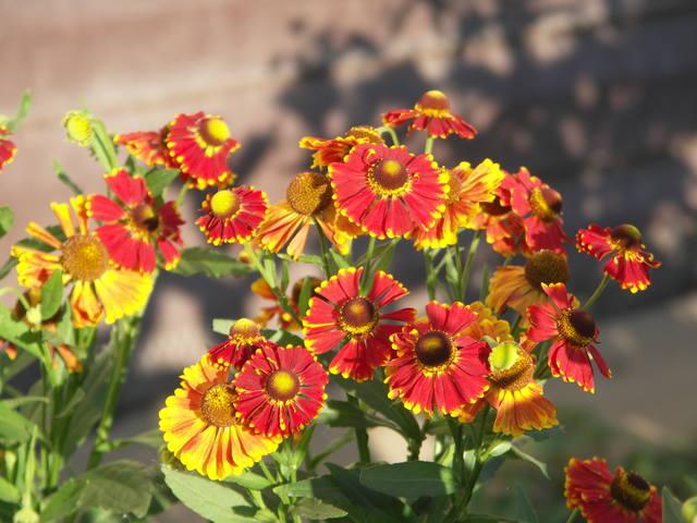дела садовые - Страница 7 22981567_m