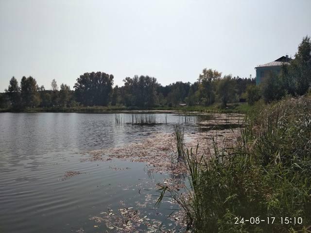 http://images.vfl.ru/ii/1535125015/3ad4c748/23032604_m.jpg
