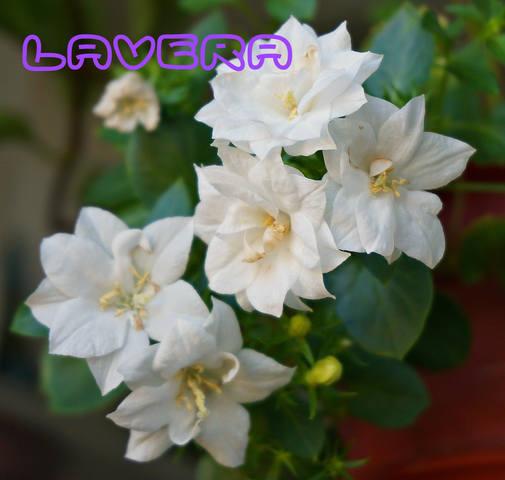 http://images.vfl.ru/ii/1535182664/7b84c5bb/23040014_m.jpg
