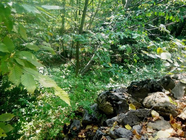Кавказ, на тропе туристической, Адыгея, 25.08.18 (48)