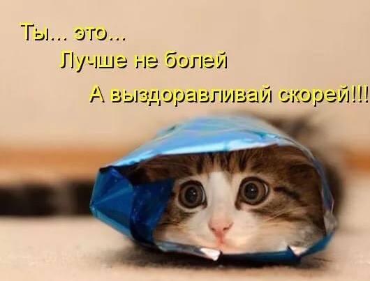 http://images.vfl.ru/ii/1535491230/e24a317a/23098439_m.jpg