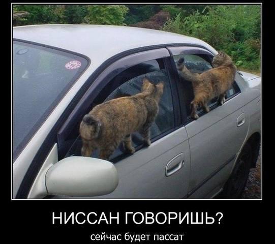 http://images.vfl.ru/ii/1535637432/2e4357d8/23122369_m.jpg