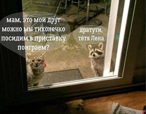 http://images.vfl.ru/ii/1535872383/c2aef95a/23153991.jpg