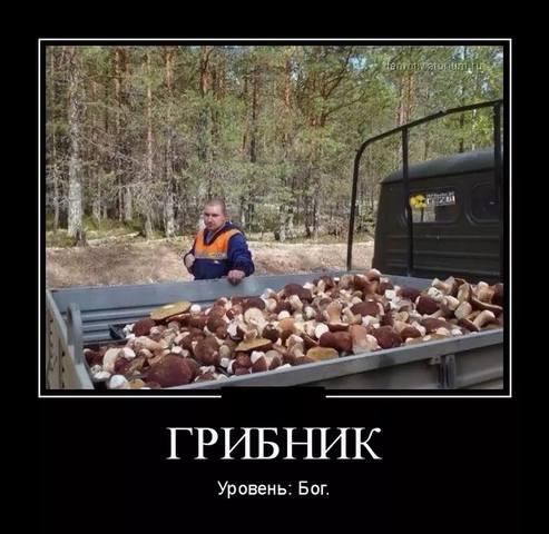 http://images.vfl.ru/ii/1536092376/aef03081/23193270_m.jpg