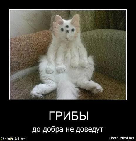 http://images.vfl.ru/ii/1536092408/dd8118cd/23193280_m.jpg