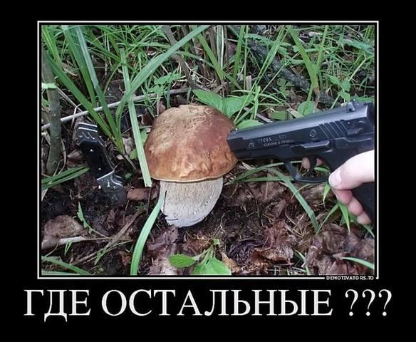 http://images.vfl.ru/ii/1536300500/640b4dc3/23226954_m.jpg