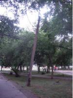 http://images.vfl.ru/ii/1536318485/8a606f29/23230299_s.jpg