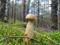 http://images.vfl.ru/ii/1536327373/7683fdc0/23232016_s.jpg