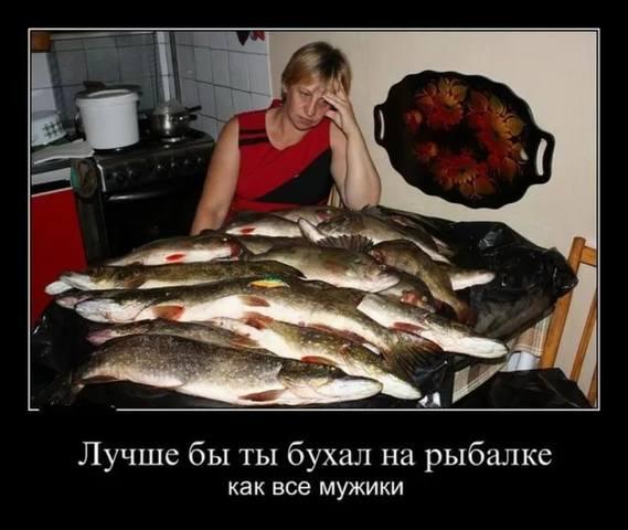 http://images.vfl.ru/ii/1536477957/cdcb840c/23254599_m.jpg