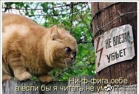 http://images.vfl.ru/ii/1536565413/15a597b8/23268856_m.jpg