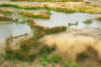 Озерца возле горячих источников. Фото Морошкина В.В.
