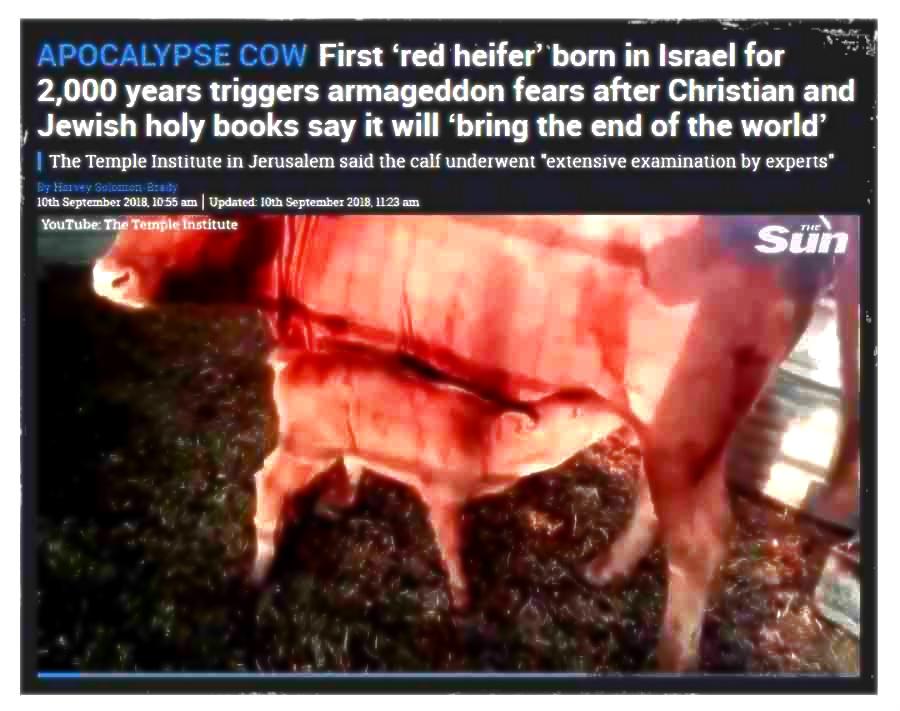 წითელი ძროხა