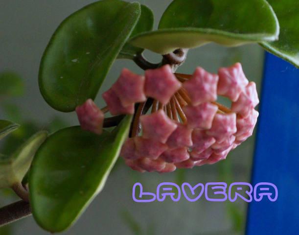 http://images.vfl.ru/ii/1536745203/f52dc18c/23300824_m.jpg