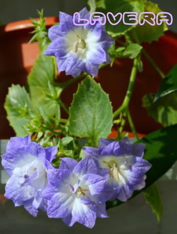 http://images.vfl.ru/ii/1536745269/4805c8da/23300844_m.jpg