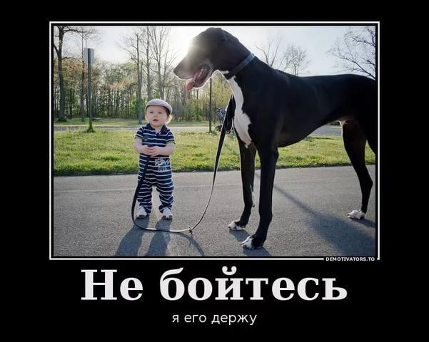 http://images.vfl.ru/ii/1537128574/3070e16d/23365516_m.jpg