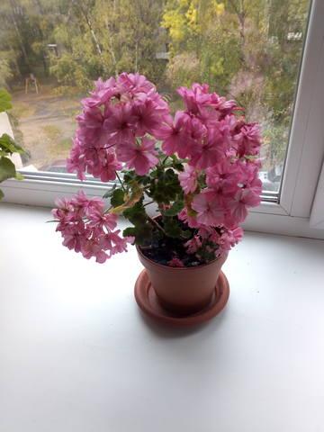 http://images.vfl.ru/ii/1537853144/25d93ed7/23493598_m.jpg
