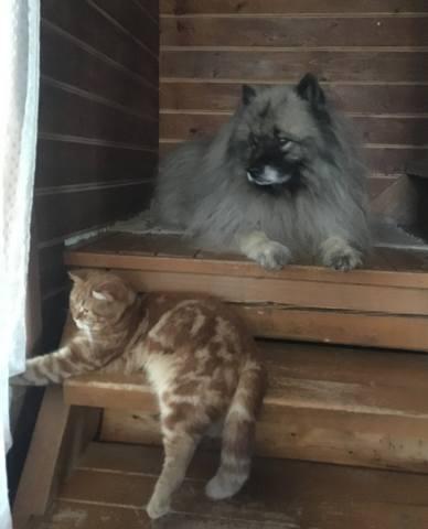 Мои Кеесхонды  Каспер, Френсис, Бор и кот Ярик. - Страница 11 23695472_m