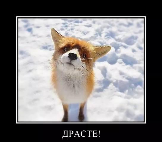 http://images.vfl.ru/ii/1539466546/e6d87e8f/23782676_m.jpg