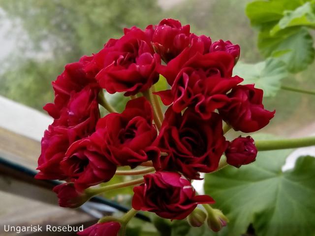 http://images.vfl.ru/ii/1540454349/3fc58984/23934595_m.png