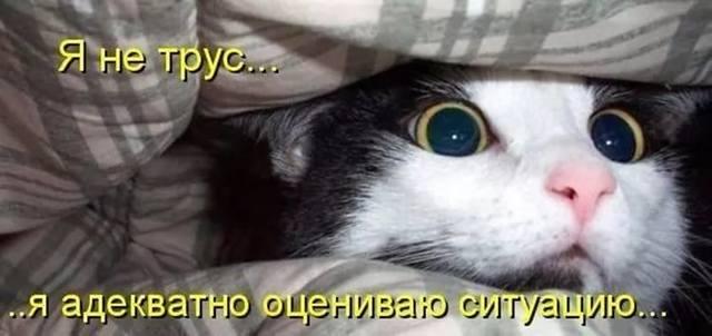 http://images.vfl.ru/ii/1540586740/826717fb/23954471_m.jpg