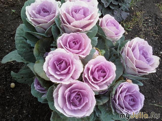 http://images.vfl.ru/ii/1540897376/070ec131/23998740_m.jpg