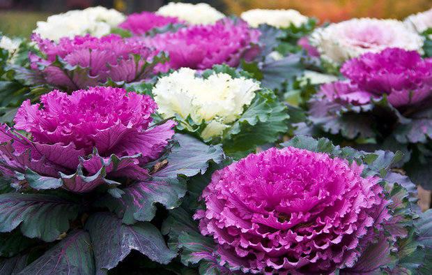 http://images.vfl.ru/ii/1540897376/7a38e946/23998738_m.jpg