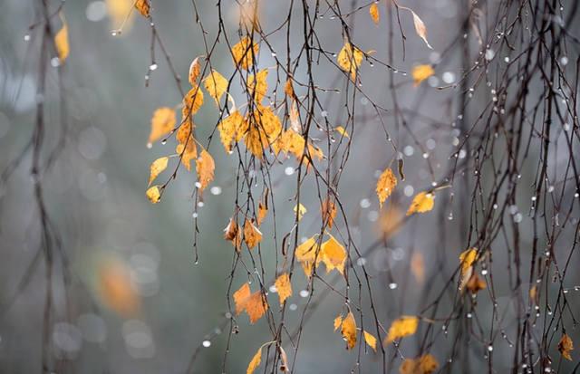 И смех, и слезы - обещает нам самый неустойчивый в эмоциональном плане месяц НОЯБРЬ... 24037347_m