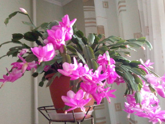 http://images.vfl.ru/ii/1541415868/271715c0/24070773_m.jpg