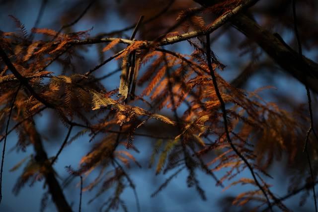 http://images.vfl.ru/ii/1541790350/bd443e8b/24129420_m.jpg