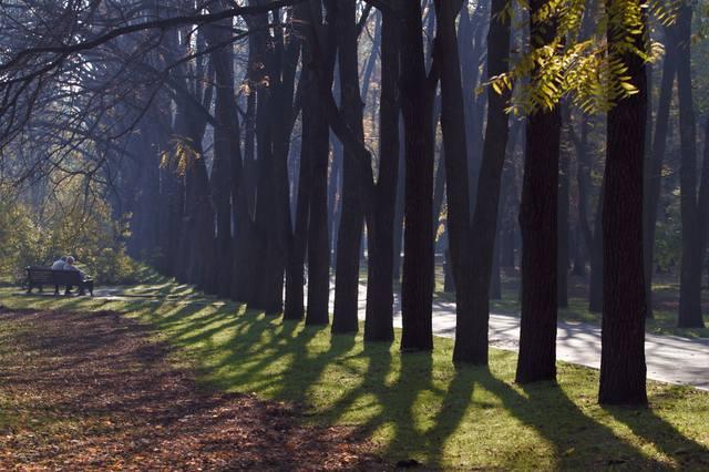 http://images.vfl.ru/ii/1541790562/911e7a91/24129499_m.jpg