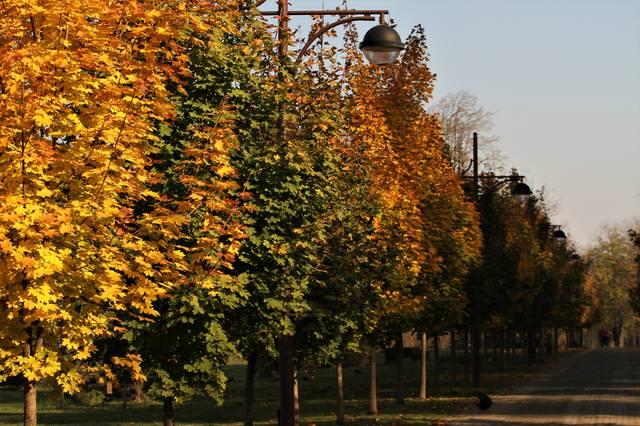 http://images.vfl.ru/ii/1541790565/ff4be5bb/24129506_m.jpg
