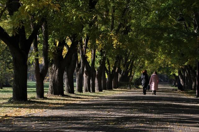 http://images.vfl.ru/ii/1541790566/301f3f5b/24129510_m.jpg