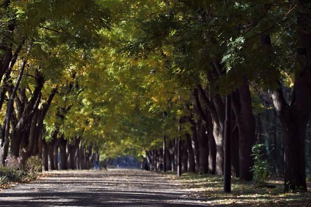 http://images.vfl.ru/ii/1541790566/dc3a1298/24129509_m.jpg