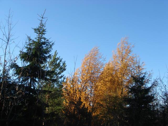 http://images.vfl.ru/ii/1541947842/62f05d6a/24150744_m.jpg