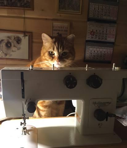 Мои Кеесхонды  Каспер, Френсис, Бор и кот Ярик. - Страница 11 24438317_m