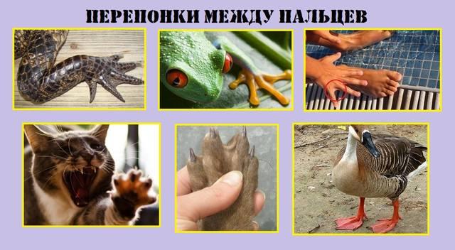 http://images.vfl.ru/ii/1544098419/8cef779c/24495118_m.jpg