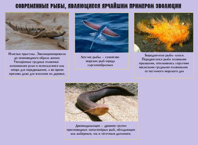 http://images.vfl.ru/ii/1544098471/80172a9b/24495126_m.jpg