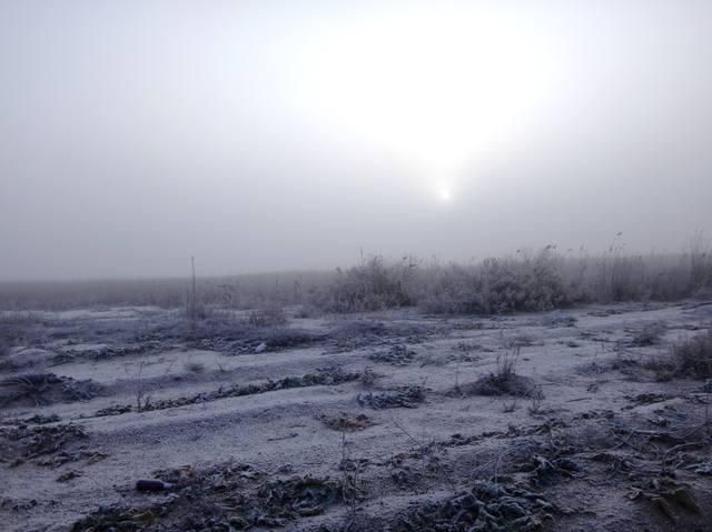 В походе велосипедном, туризм, Природа , 26.11.18, Азовское побережье (1)