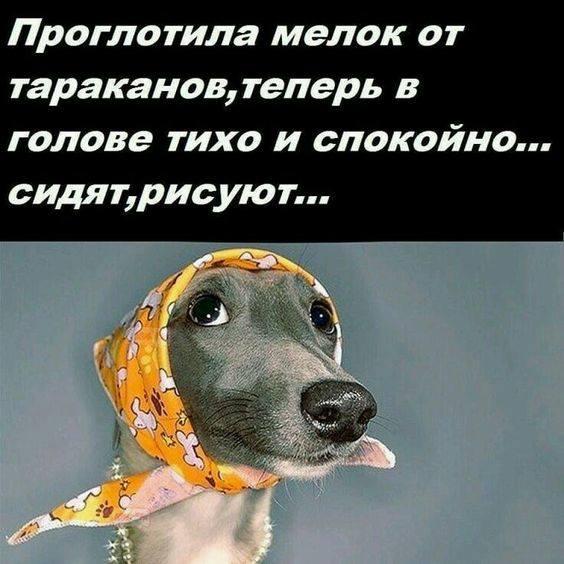 http://images.vfl.ru/ii/1544728821/5113c89f/24590174_m.jpg