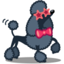 dog-poodle-icon (128х128)