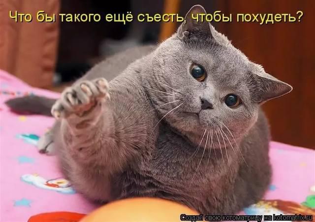 http://images.vfl.ru/ii/1546386722/984f6a2e/24794014_m.jpg