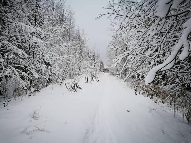 http://images.vfl.ru/ii/1546609478/3594b443/24817316_m.jpg