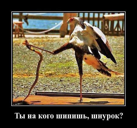http://images.vfl.ru/ii/1547167934/2e33f1a1/24901119_m.jpg