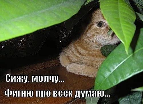 http://images.vfl.ru/ii/1547286227/9c42f3bc/24919971_m.jpg
