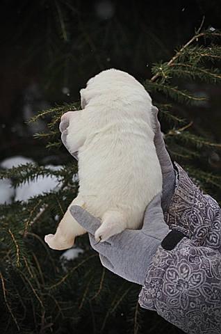 http://images.vfl.ru/ii/1547465177/8858a5f3/24946164_m.jpg