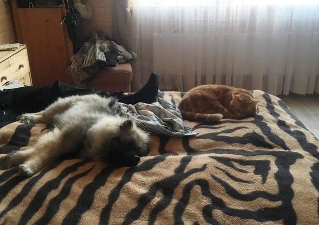 Мои Кеесхонды  Каспер, Френсис, Бор и кот Ярик. - Страница 12 24947518_m