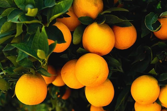 Очищение Дома «Девять Апельсинов» Разбор Обряда: Как я Дом Апельсинами Чистил. 25089743_m