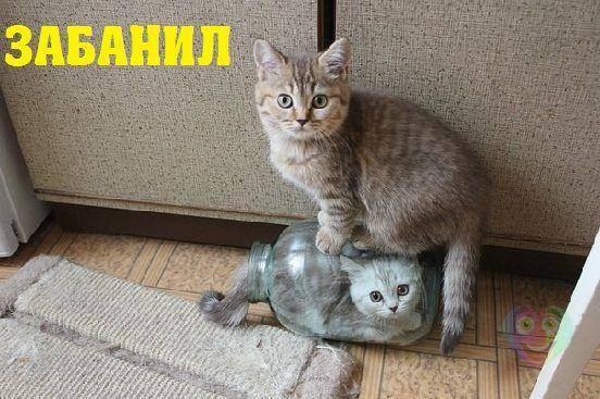 http://images.vfl.ru/ii/1548838314/b6a512b5/25171223_m.jpg